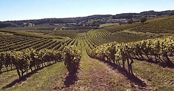 With Cognac, it's all about terroir